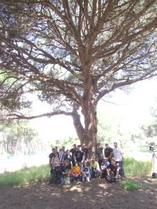 040513_Pinus_pineaIMG_4137