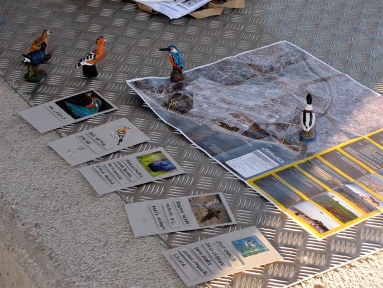 CensoInviernoDeltaLlobregat2012 (6)