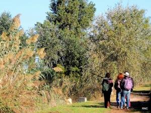 5 maratón ornitológico delta del Llobregat octubre 2013