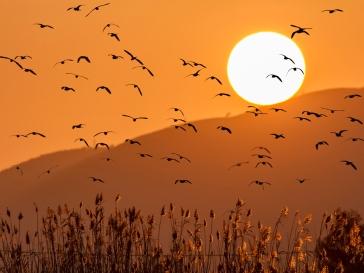 Can Dimoni puesta sol -JA Mate-