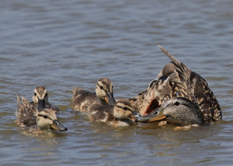 Generalitat: Aturin la matança d'aus al delta del Llobregat! |Change.org