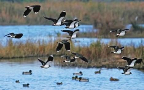 11a edició de la Marató ornitològica cooperativa al Delta delLlobregat