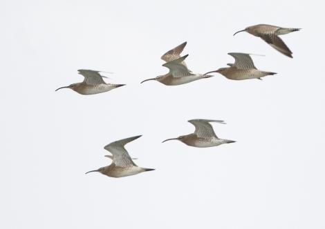 14a edició de la Marató ornitològica cooperativa al Delta delLlobregat