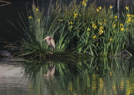 Crònica de la 14a marató ornitològica cooperativa al Delta delLlobregat